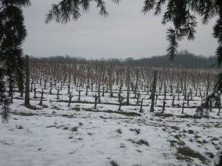 """Le vignoble """"Chateau Naudy"""" recouvert d'une fine couche de neige"""