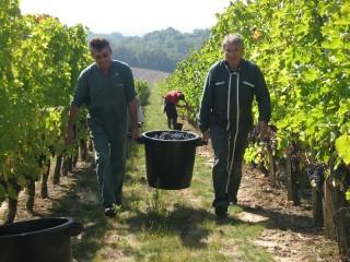 Deux vendangeurs portent un seau rempli de raisin.